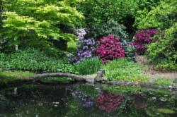 Rhododendron Zuschendorf